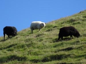 1 mouton... 2 moutons...